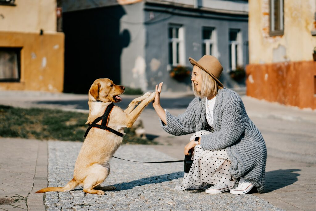 Are You Making These Mistakes When Training Your Dog?
